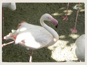 Zoo Fuengirola 2