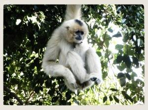 Zoo Fuengirola 3