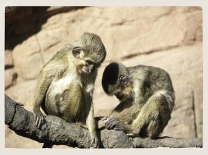 Zoo Fuengirola 4