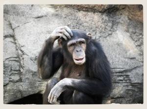 Zoo Fuengirola 5