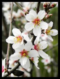 Blom 1