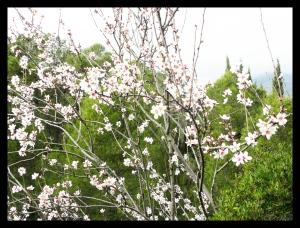 Blom 3