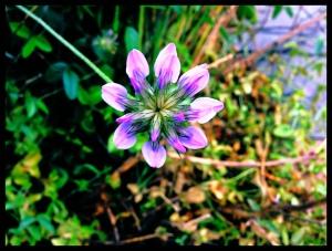 Flower, 4 april 2014