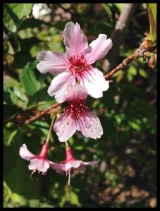 Vårblomma 6